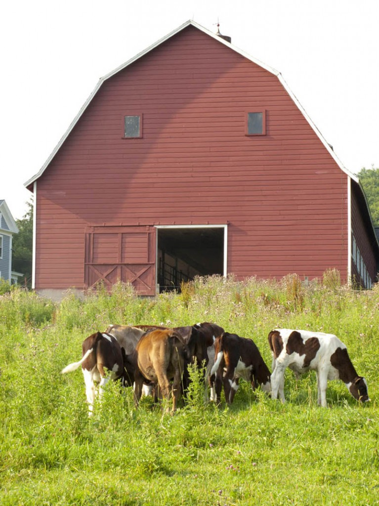 Leave a Reply Cancel replyReal Barn With Animals