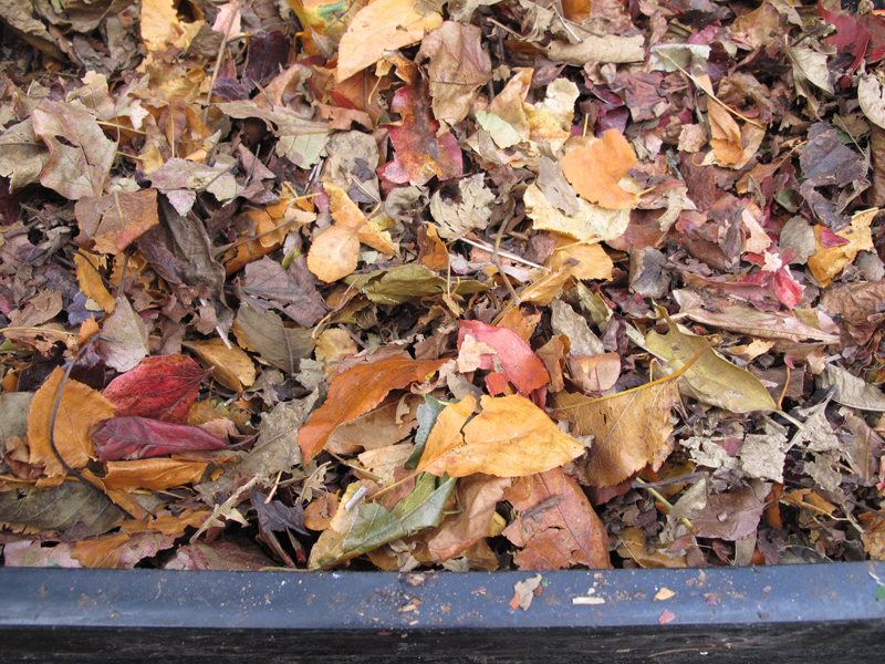 compost-leaves