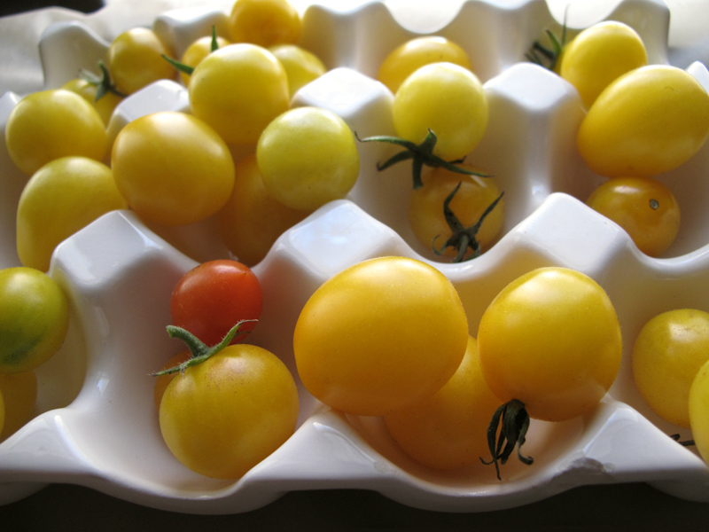 grape-tomatoes