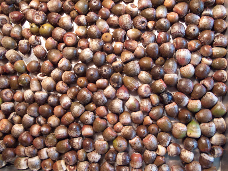 Preserving the harvest brooklyn feed for How to preserve acorns
