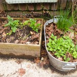 Parsley, chives and lemon balm